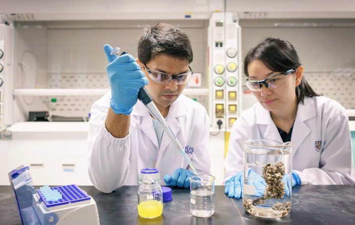 A research team from the National University of Singapore discovered that nanoplastics are easily ingested by barnacle larvae and they can accumulate in thebodies of the larvaeover time. Mr Samarth Bhargava(left) and Ms Serina Lee(right) are members of the research team.