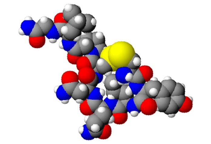 Spacefilling model of oxytocin. Created using ACD/ChemSketch 8.0, ACD/3D Viewer and The GIMP. Credit: Wikipedia.