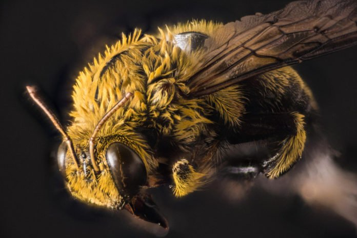 The scientists developed a novel high-throughput sequencing technique that efficiently detected in bees both previously identified and 27 never-seen-before viruses belonging to at least six new families in a single experiment. Image: Jeff Kerby / National Geographic