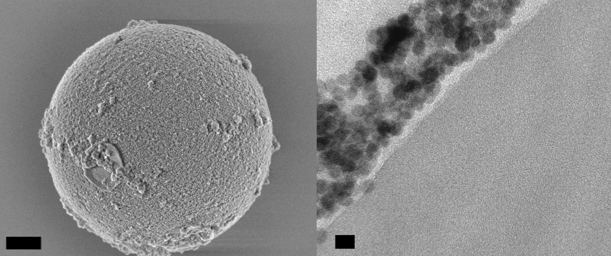 A scanning electron micrograph image (left) of a 5-micron-diameter polystyrene bead that is coated with nanoparticles, and a transmission electron micrograph image (right) that shows a cross-section of a bead, with nanoparticles along its outer surface. The scale bar at left is 1 micron, and the scale bar at right is 20 nanometers. (Credit: Angel Fernandez-Bravo, Shaul Aloni/Berkeley Lab)