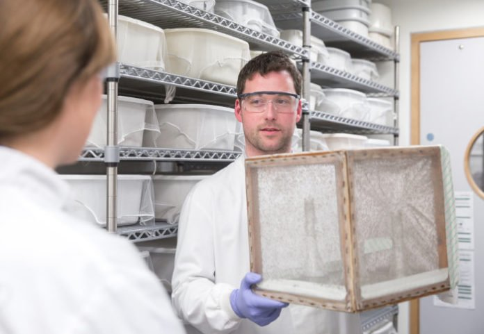 Dr Andrew Blagborough with a box of mosquitoes