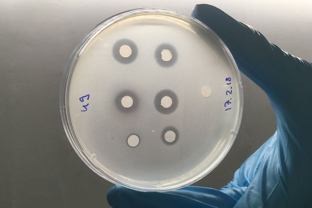 A novel antibiotic from weeds