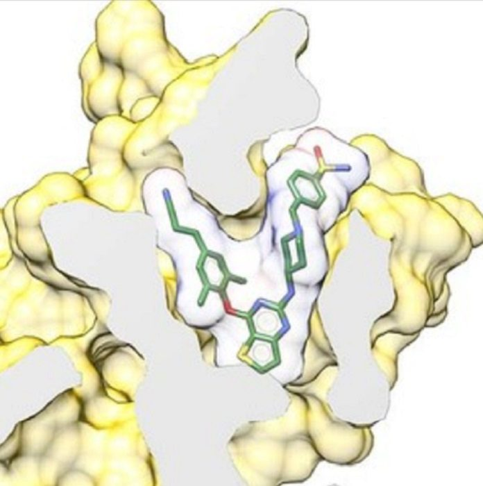 A newly developed inhibitor (compound 25a) binds to human immunodeficiency virus (HIV) reverse transcriptase, a viral protein essential for HIV replication.