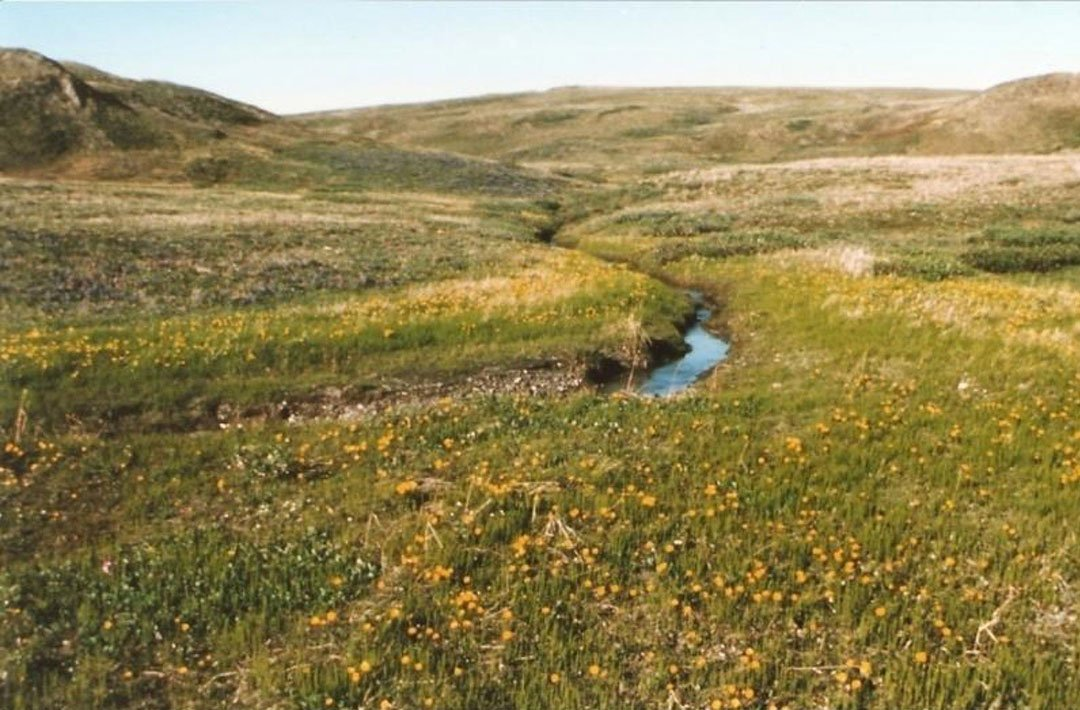 Image shows vegetation in Qikiqtaruk-Herschel Island Territorial Park in the Yukon in 1987, as provided by Arctic ecologist Isla Myers-Smith. Image credit: Isla Myers-Smith/University of Edinburgh