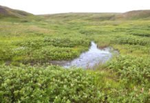 A 2017 image of Qikiqtaruk-Herschel Island Territorial Park in the Yukon shows more vegetation, shrubs and water compared with the 1987 image of the same area. Image credit: Isla Myers-Smith/University of Edinburgh