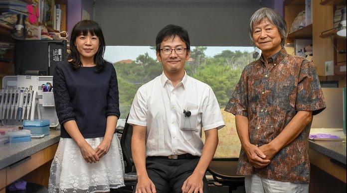 From left to right: Ms. Sakura Kikuchi, Dr. Keisuke Nakashima & Prof. Noriyuki Satoh (leader of OIST's Marine Genomics Unit)