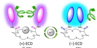 When a metal ion is inserted, the molecule changes geometry, acting as an on/off switch. (UNIGE)