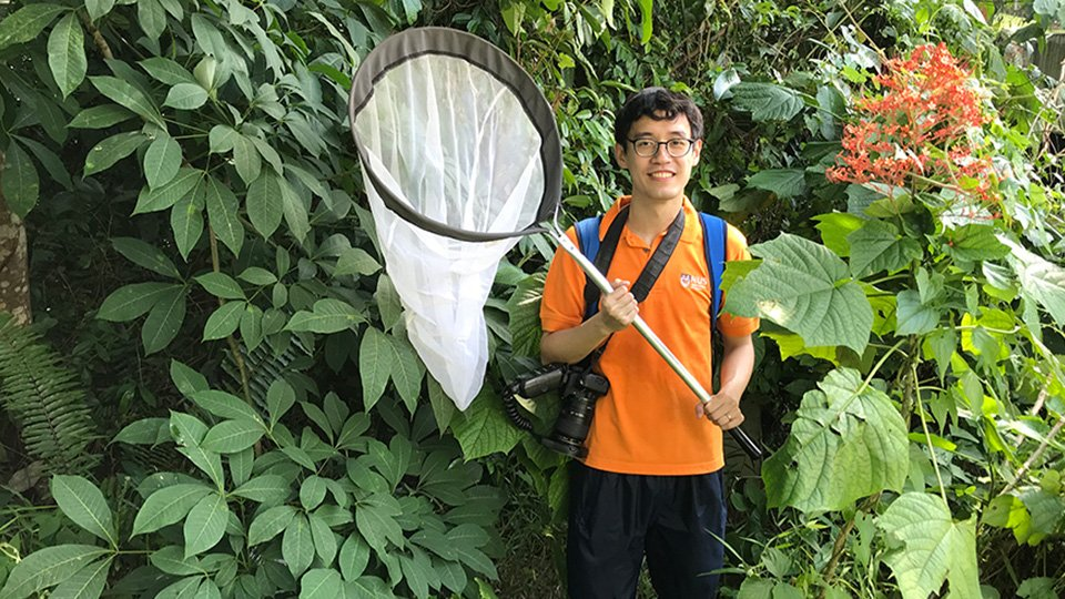 Mr Tan Ming Kai, a PhD student from the NUS Department of Biological Sciences, is a key member of a research team which has discovered that orthopterans, such as grasshoppers and crickets, visit flowers more frequently than previously known, and they pollinate the flowers they visit.