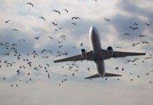 'Sheepdog robot' herds birds away from flight paths
