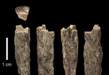 "This bone fragment (""Denisova 11"") was found in 2012 at Denisova Cave in Russia by Russian archaeologists and represents the daughter of a Neandertal mother and a Denisovan father. © T. Higham, University of Oxford"