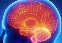 Human brain Credit: Shutterstock/CLIPAREA
