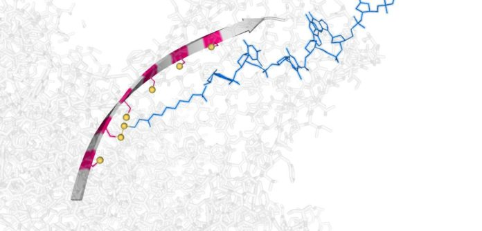 Molecular conveyor belt provides a foundation for nanoscale DNA-processing machines Image credit: Yujia Qing