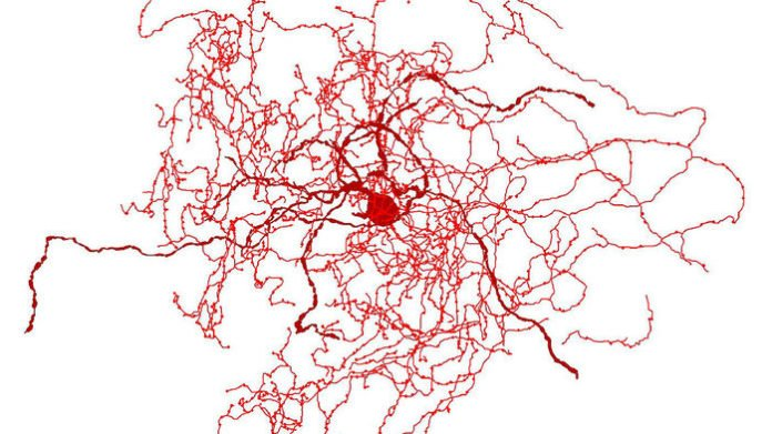 new brain cell, new neoron