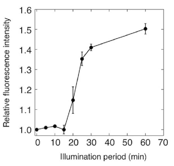 Figure 1. Monitoring of photosynthetic oxygen production in cyanobacteria using ANA sensor ANA sensor was added to the culture of cyanobacteria, and the fluorescence of ANA sensor was monitored. Fluorescence of ANA sensor started to increase after 15 min of illumination, indicating the ANA sensor detected oxygen produced by cyanobacteria.