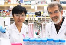 Professor Daniel Tenen (right) and Dr Liu Bee Hui (left), who are researchers from CSI Singapore, are members of the research team that had developed a novel peptide drug that could potentially treat liver cancer more effectively.