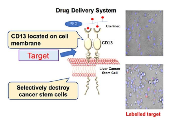Outline of the drug delivery system (DDS) created in this study