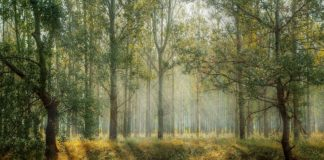 Europe's renewable energy directive is poised to harm the global forests
