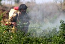 A Telangana farmer spraying pesticide in a field. [Picture: InStem]