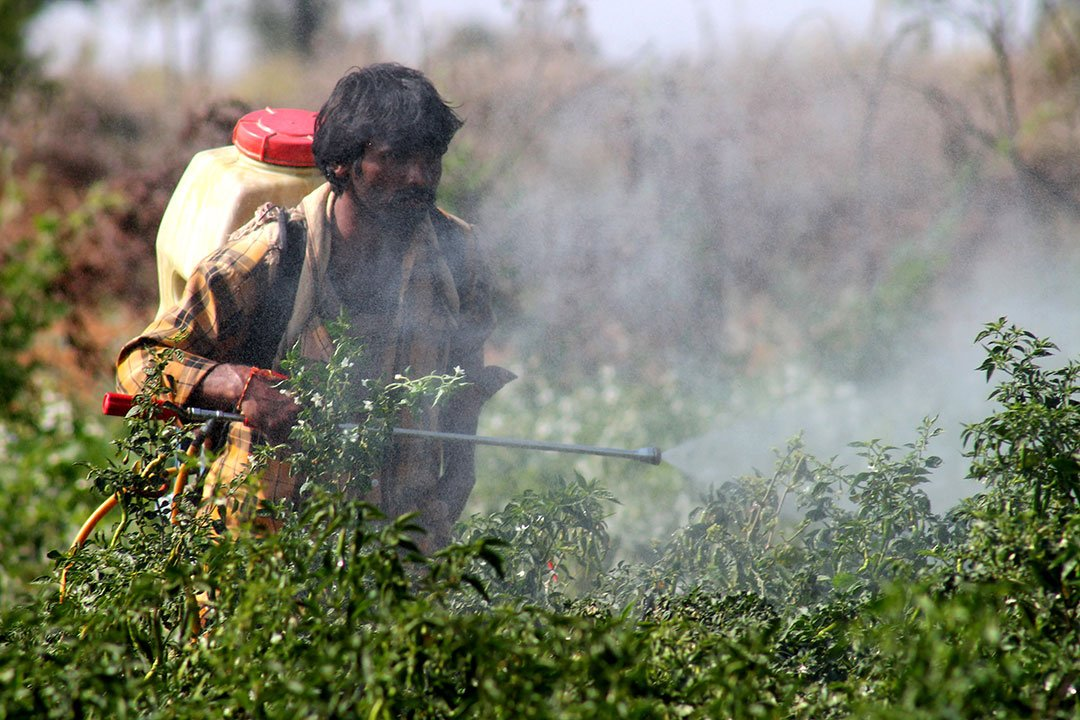 Pesticides And Insecticides