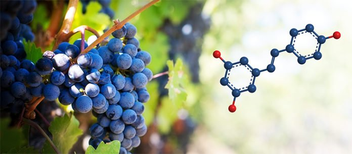 Resveratrol is a well-known natural product which is found in grapes and in red wine. (UNIGE_Aymeric Monteillier)