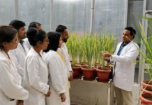 Dr Ashwani Pareek and his team which have developed transgenic rice that can grow under high salinity and drought.