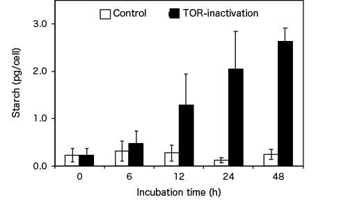 Algal starch accumulation through TOR inactivation Compared with the control, inactivation of TOR resulted in an approximately ten-fold increase in starch content in C. merolae after 48 hours.