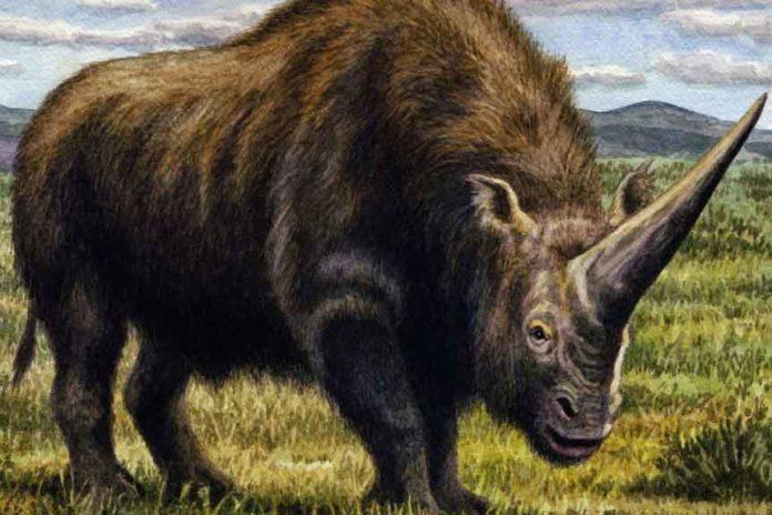 Artist's impression of Elasmotherium. © W. S. Van der Merwe