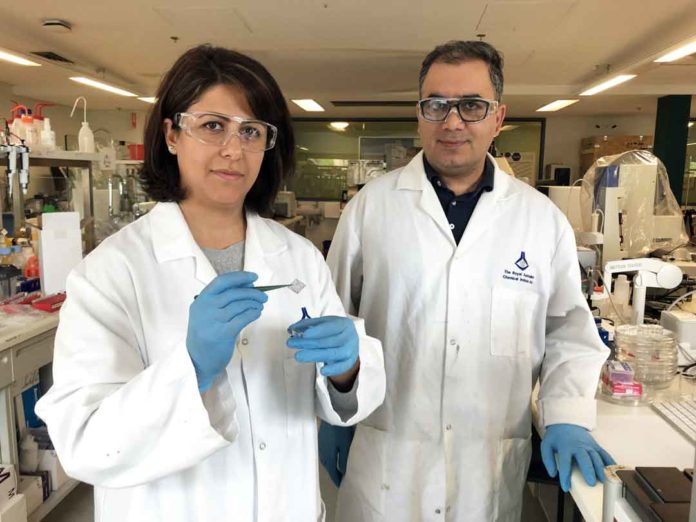 Drs. Esrafilzadeh and Jalili working on 3D-printed graphene mesh in the lab. Credit: RMIT University