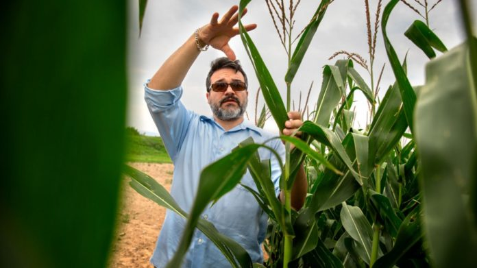 Mike Gore, Ph.D. '09, plant geneticist in the College of Agriculture and Life Sciences, explains corn breeding at Musgrave Research Farm in Aurora, New York, in August.