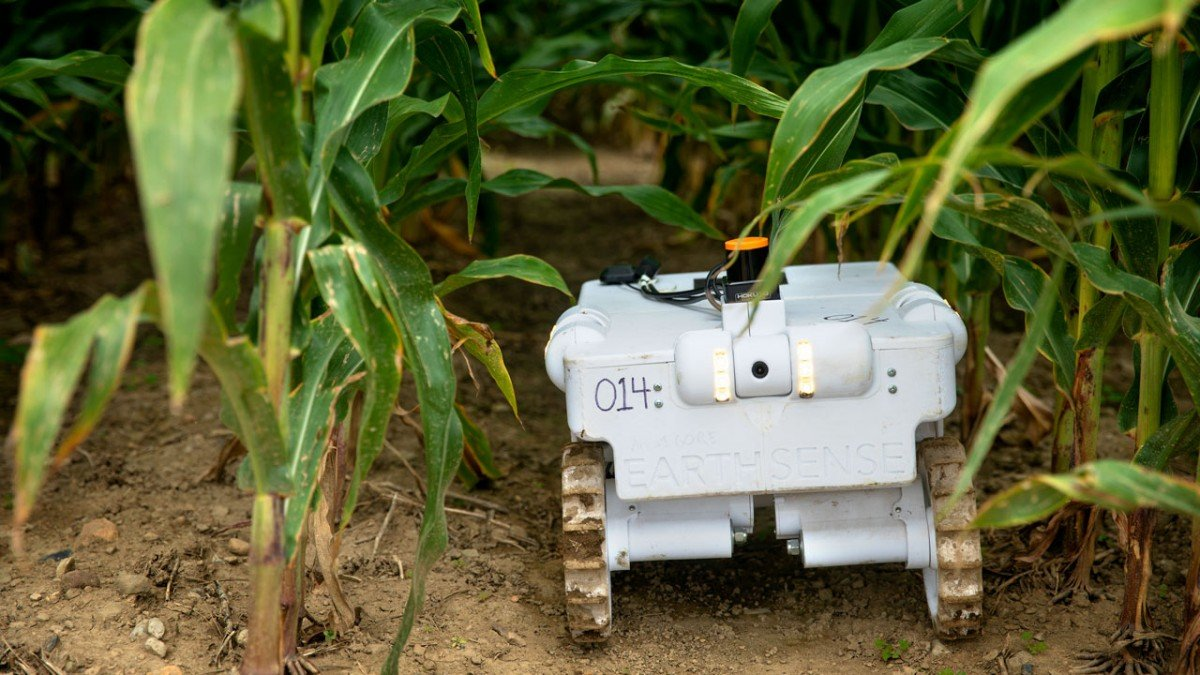 A TerraSentia robot, which is being trained to perform remote diagnostics on individual corn plants, moves between rows of corn at Musgrave Research Farm in Aurora, New York.