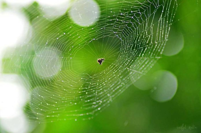 Scientists now know why spider silk is stronger than steel