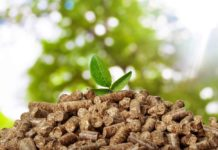 Scientists advance biomass transformation process