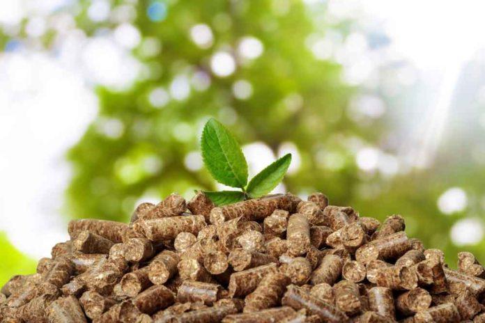Scientists advance biomass transformation process