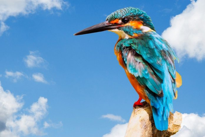Mystery solved: how birds evolved to have colorful feathers