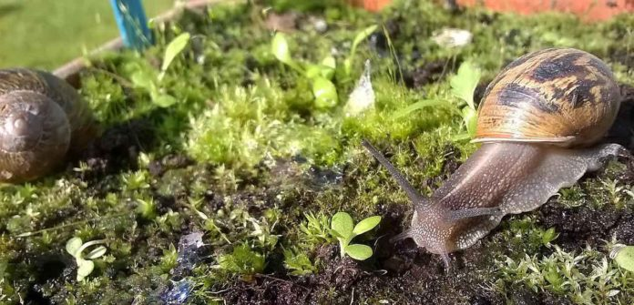 Study solves puzzle of snail and slug feeding preferences