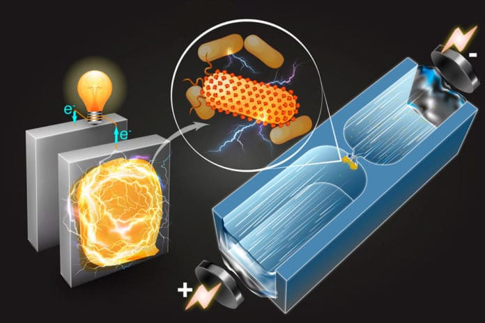 A microfluidic technique quickly sorts bacteria based on their capability to generate electricity.