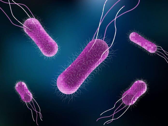 Vector illustration of Salmonella Bacteria
