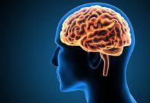 The human brain works in reverse order to retrieve memories