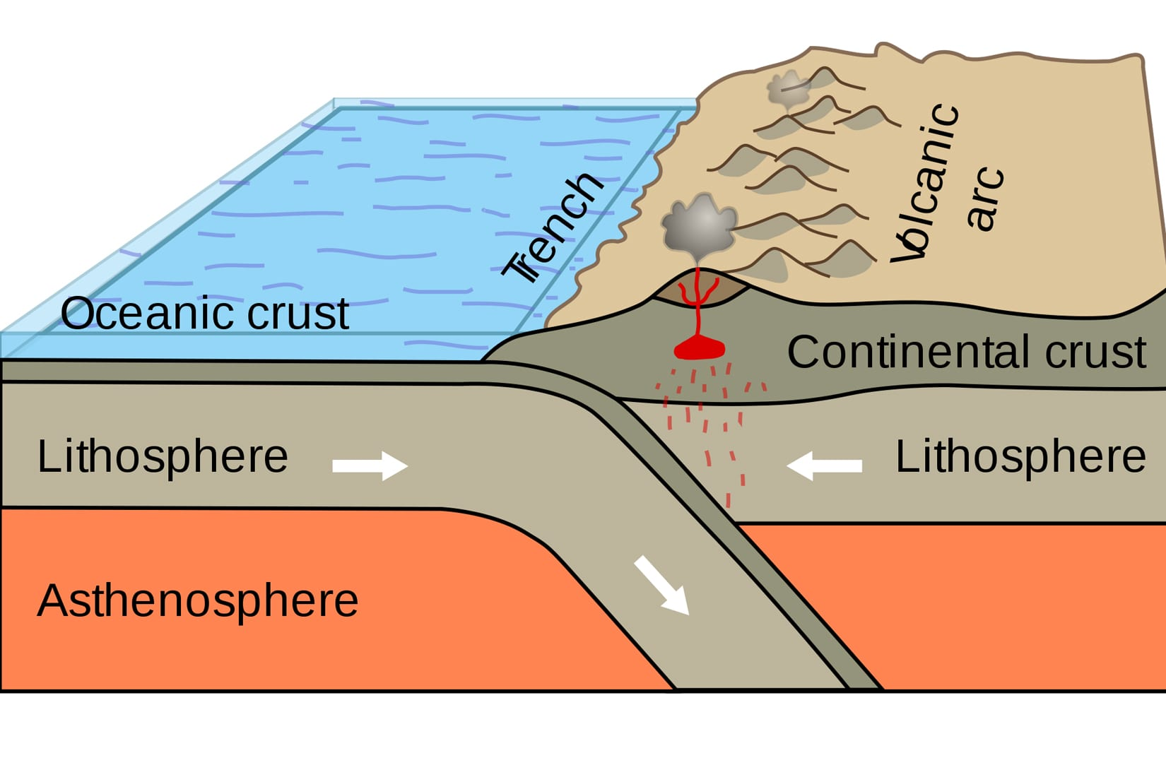 A schematic illustration of plate subduction beneath a continental arc. (Image courtesy of Booyabazooka/Wikimedia Commons)