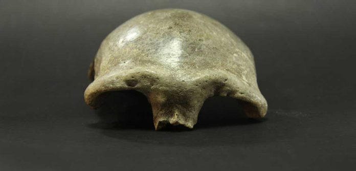 Salkhit skullcap, Mongolia © Institute of History and Archaeology & Academy of Sciences (Mongolia)