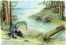 "Illustration ""The midnight sun over Early Triassic Antarctica"" by Adrienne Stroup. Along the banks of a river, three archosaur inhabitants of the dense Voltzia conifer forest cross paths: Antarctanax shackletoni sneaks up on an early titanopetran insect, Prolacerta lazes on a log, and an enigmatic large archosaur pursues two unsuspecting dicynodonts, Lystrosaurus maccaigi.Adrienne Stroup/Field Museum."