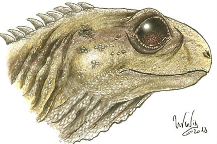 Life image of Clevosaurus Image credit:Sophie Chambi-Trowell