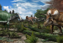 Reconstruction of a late Maastrichtian (.66 million years ago) palaeoenvironment in North America, where a floodplain is roamed by dinosaurs like Tyrannosaurus rex, Edmontosaurus and Triceratops. Image credit: Davide Bonadonna