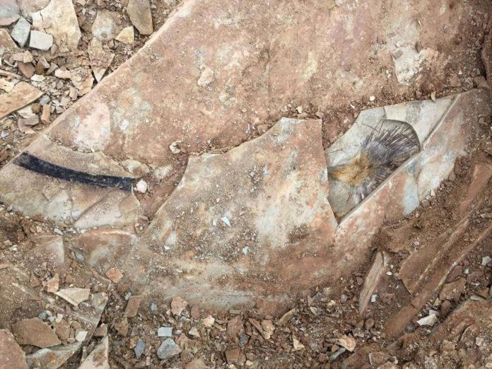 Palm fossil (Photo: Tao Su)
