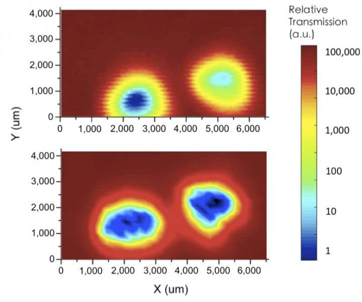 Terahertz mapping of the mouse-tail samples using a conventional setup (upper image) and the SBE (lower image). The hair (yellow and red), skin (light blue), and bone (dark blue) were clearly distinguishable using the SBE.  CREDIT Scientific Reports