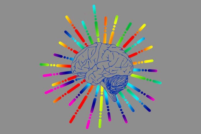 Scientists discover taste center in the human brain