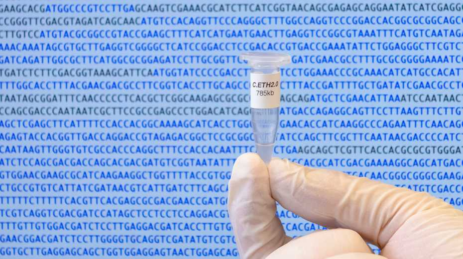 The Caulobacter ethensis-2.0 genome in a micro tube. (Photograph: ETH Zurich / Jonathan Venetz)