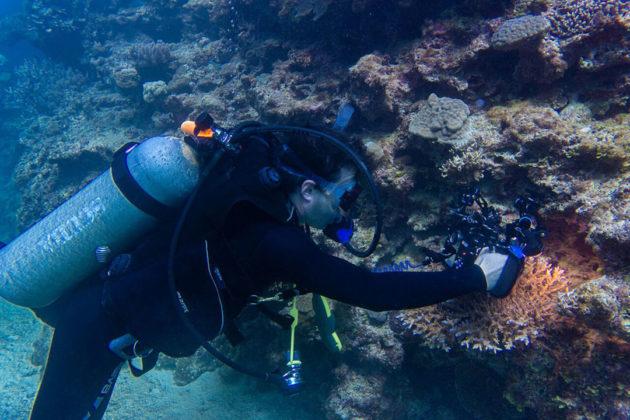 Researchers examining corals underwater. Credit: Varsha Mathur, Patrick Keeling Lab