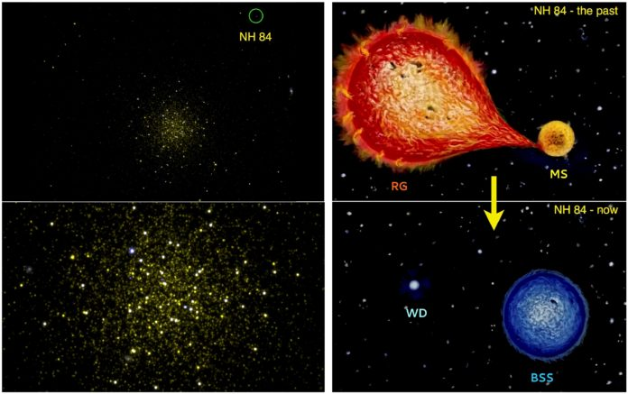 Astrosat image of Globular Cluster NGC 5466 with NH 84 marked (top left); zoomed-in version (bottom left). Artistic representation of NH 84 showing how MS swallowed up outer layers of its companion in its enlarged Red Giant phase (top right). The companion becomes White Dwarf (bottom right) while the first star becomes massive and bluer. [Credit: Snehalata Sahu and team]