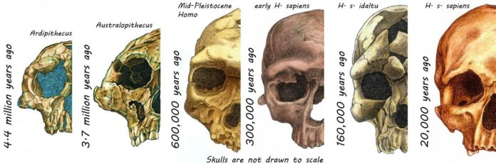 Study reveals the amazing evolution of the human face
